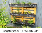 Creative wood herb planter made of wooden pallets pallet hanging on the grey fence in a backyard. Garden work. Vegetable life. Pallet painted in black as interesting idea for plants. Rosemary Basil. - stock photo
