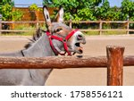 Donkey Portrait At Farm Fence....