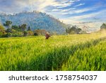 Agricultural Landscape View And ...