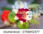 Israeli Six Petal Pomegranate...