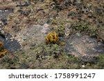 A Ball Of Ornate Seaweed ...
