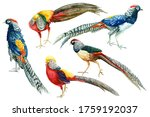 Set Of Colorful Birds ...