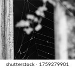 Section Of A Spider Web Agains...