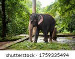 Elephant On Chain To Restrict...