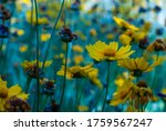 Glade With Yellow Flowers....