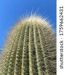 Close Up Low Angle Tall Cactus...