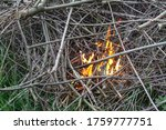 Tree branches are burning with...