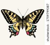 Beautiful Swallowtail Butterfly ...