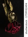 Dried Red Rose With Drops On A...