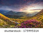 Stock photo magic pink rhododendron flowers in the mountains summer sunrise 175995314