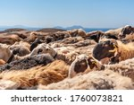 Flock Of Sheep On A Background...