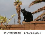 Black Domestic Cat Sits On A...