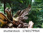 Large Tree Stump Uprooted In...