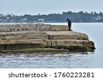Cormorant Perched On Rocks In...
