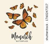 Monarch Butterflies Flying...