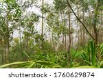 forest path along a levada in... | Shutterstock . vector #1760629874