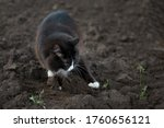Black And White Fluffy Cat Dig...