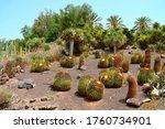 Golden Barrel Cactus Latin Name ...