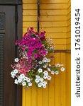 Ampel Flowers  Plants In...