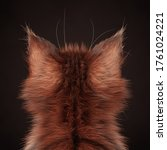 Cat Ears. Rear View Of A...