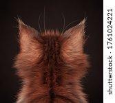Cat Ears. Rear View Of A...