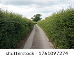 Country Road With High Hedgerow