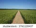 Path Through A Field Of Crops