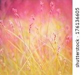 field of grass in spring or...   Shutterstock . vector #176136605