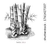 Botanical Of Bamboo Shoots Hand ...