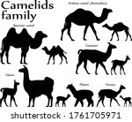 Collection Of Different Specie...