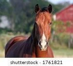 A Concerned Horse On A Farm.