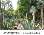 Exotic Outdoor Garden With Palm ...
