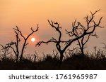 Sunrise In Savannah Of Africa...
