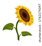 sunflower blossom. hand drawn...   Shutterstock . vector #1762174397
