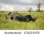 Black Rhino In The Green Grass...