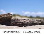 Dry Wood On The Beach
