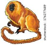 Golden Lion Tamarin  Little...
