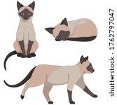 Siamese Cat In Different Poses. ...