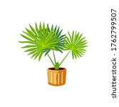potted plant  palm tree for... | Shutterstock .eps vector #1762799507