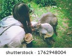A Girl Is Feeding Wallabies.