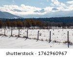 A Winter Landscape Outside The...