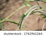 Eastern Pondhawk Dragonfly In...