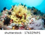 beautiful coral reef in anilao  ... | Shutterstock . vector #176329691
