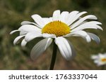 Abstract Background With White...