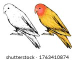 Drawing Of Standing Lovebird....