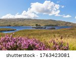 Trees In The Loch Assynt ...
