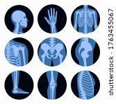 human man skeleton anatomy ... | Shutterstock .eps vector #1763455067