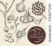 vector drawing garlic set....   Shutterstock .eps vector #1763677244