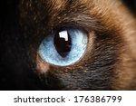 One Siamese Cat Eye Macro...