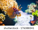 Different small tropical fish in coral reef underwater
